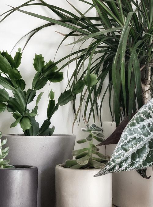צמחי בית וגינה
